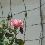 325 Womens Prison Tirana Alb 13 (61)